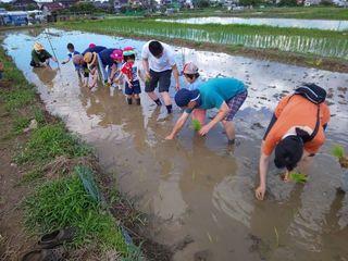 飯能市エコツーリズムで田植え・稲刈り体験の実施